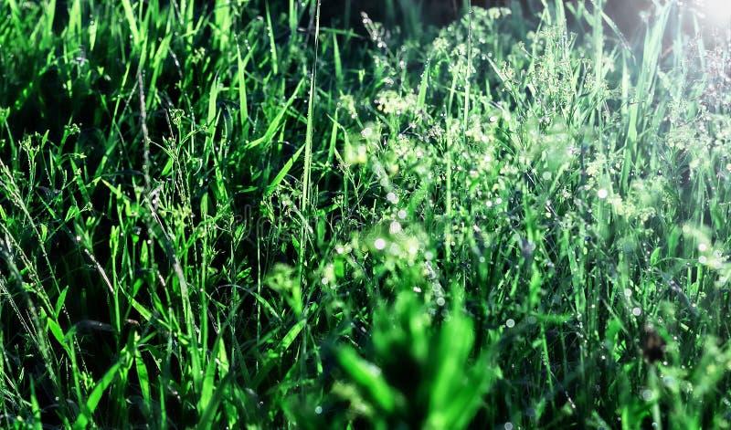 Роса в траве утра стоковая фотография rf