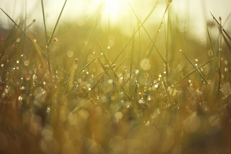 Роса на верхней траве стоковое фото rf