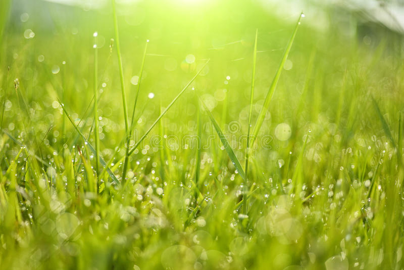 Роса на верхней траве стоковые фотографии rf