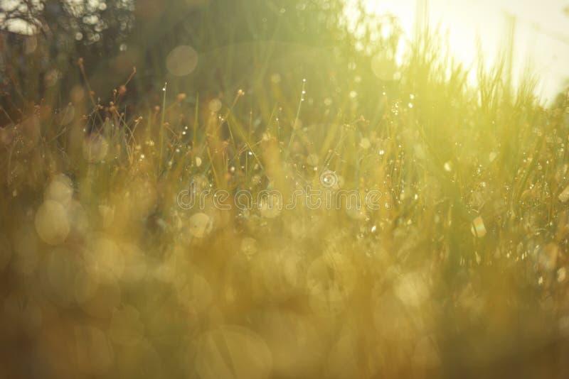 Роса на верхней траве стоковое фото