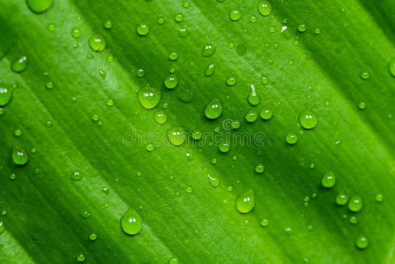 Роса на лист gree стоковое фото rf