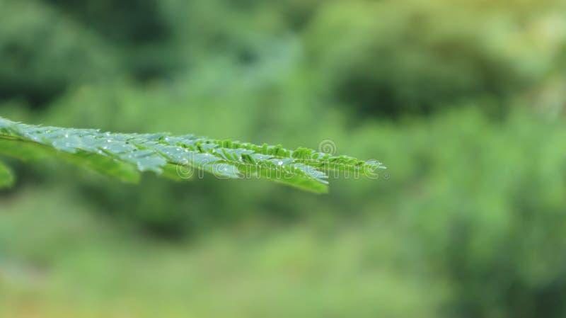 Роса на листьях в предпосылке нерезкости леса стоковое фото rf