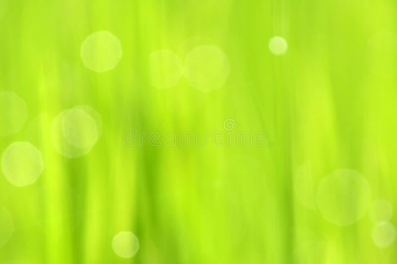 Роса на свежей зеленой траве с падениями воды внутри в утре Gre стоковая фотография