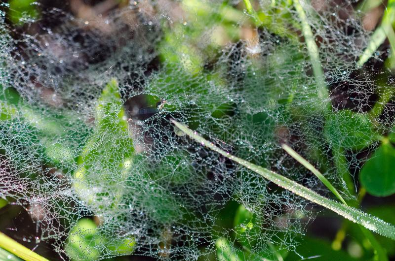 Роса на сетях паука в траве стоковое изображение