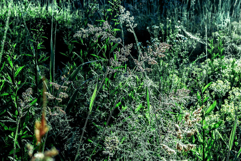 Роса на траве утра стоковое фото rf