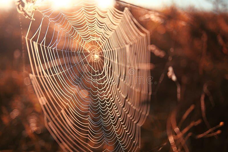 Роса паутины стоковое изображение rf