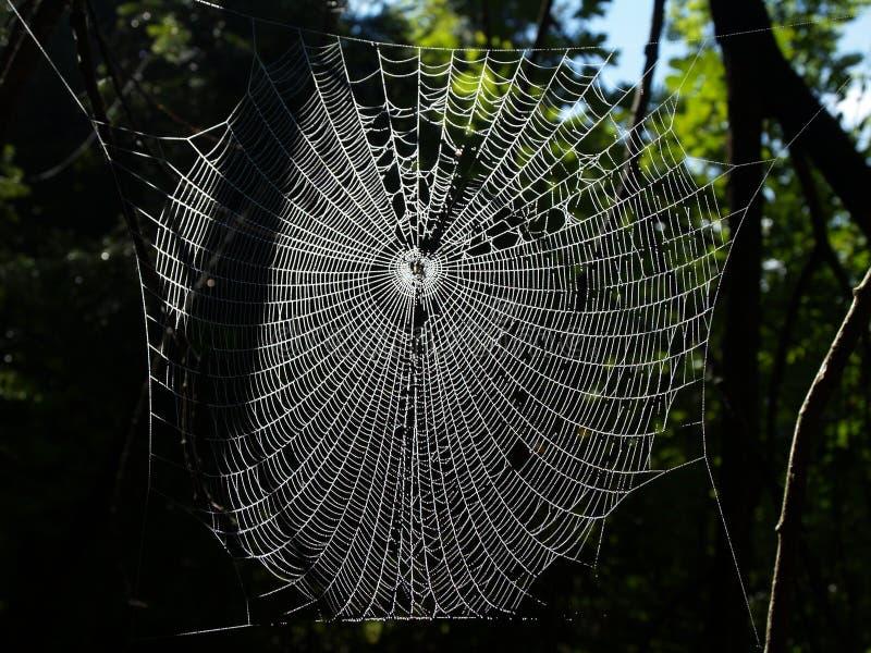 Роса покрыла паутину стоковые фотографии rf