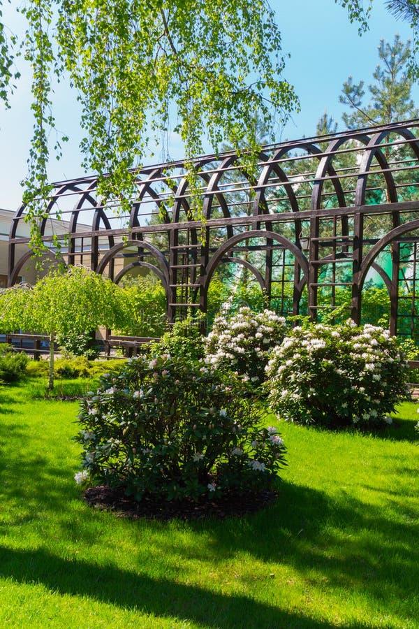 Роскошные свежие белые кусты белых цветков в парке на изумрудно-зеленой траве растя в тени дерева стоковые изображения rf