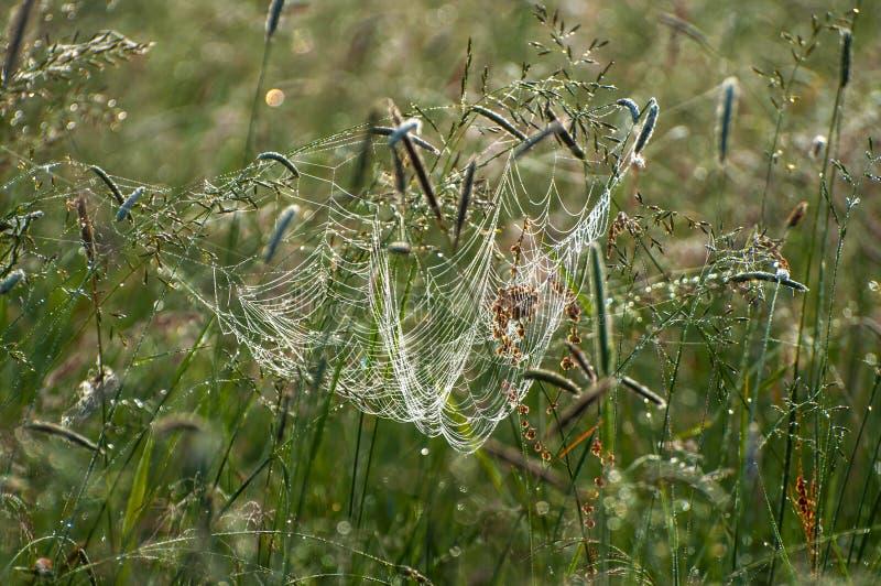 Росная плотная спутанная сеть паука стоковые изображения