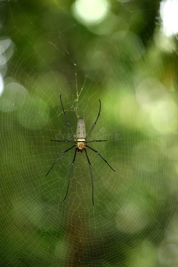 росная сеть паука стоковое фото