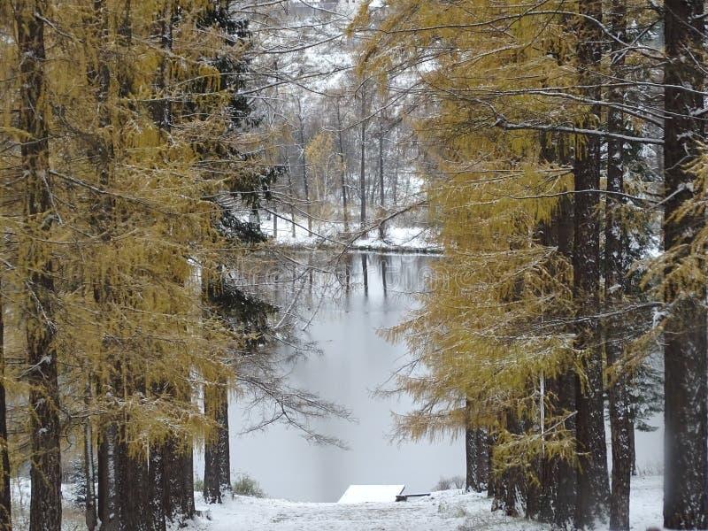 Россия Прогулка вокруг Москвы Зима стоковая фотография