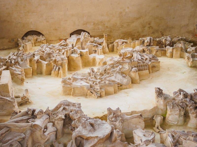 Россия, регион Bryansk, Yudinovo Музей Paleolithic - 19-ое апреля 2019: Отклонение стоковая фотография