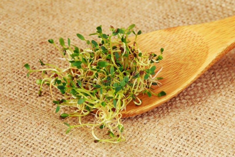 ростки брокколи свежие стоковое фото