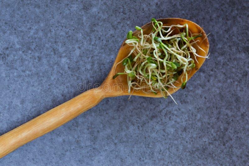 ростки брокколи свежие стоковая фотография