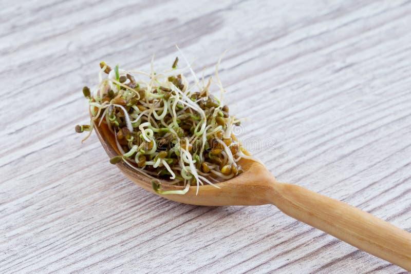 ростки брокколи свежие стоковые изображения rf