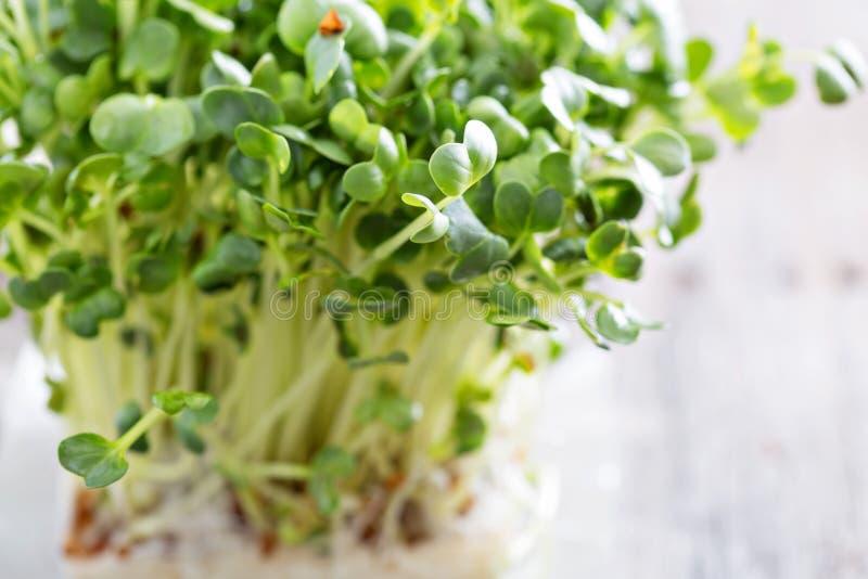 Ростки редисок свежие и зеленые стоковое фото rf
