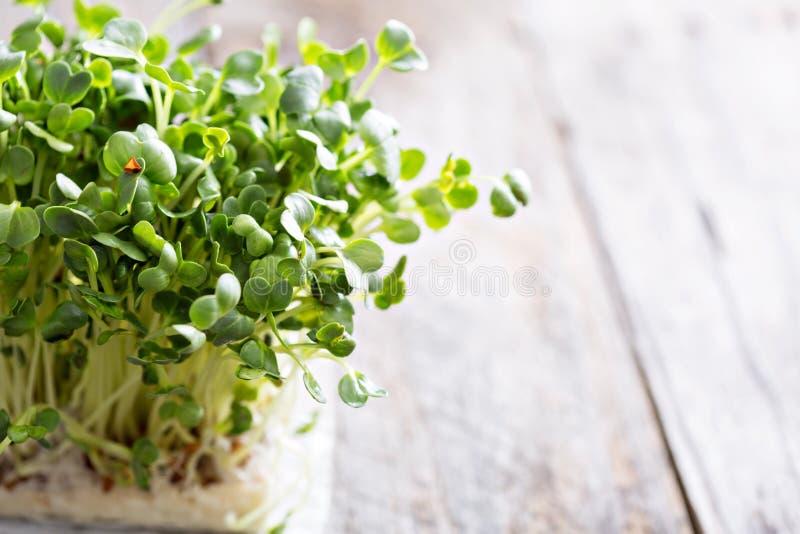 Ростки редисок свежие и зеленые стоковое фото