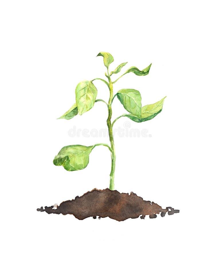 Росток весны - зеленое растение акварель иллюстрация штока