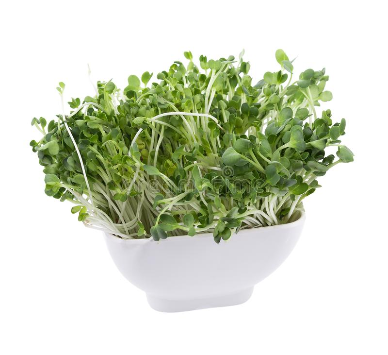 Росток Kaiware, японский овощ или кресс-салат на белой предпосылке стоковое фото