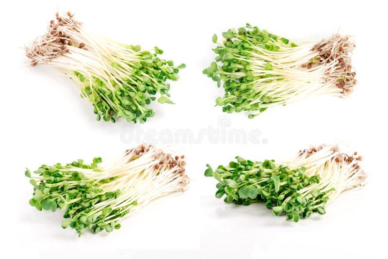 росток kaiware, японский овощ или кресс-салат, оно зеленый и стоковое фото rf