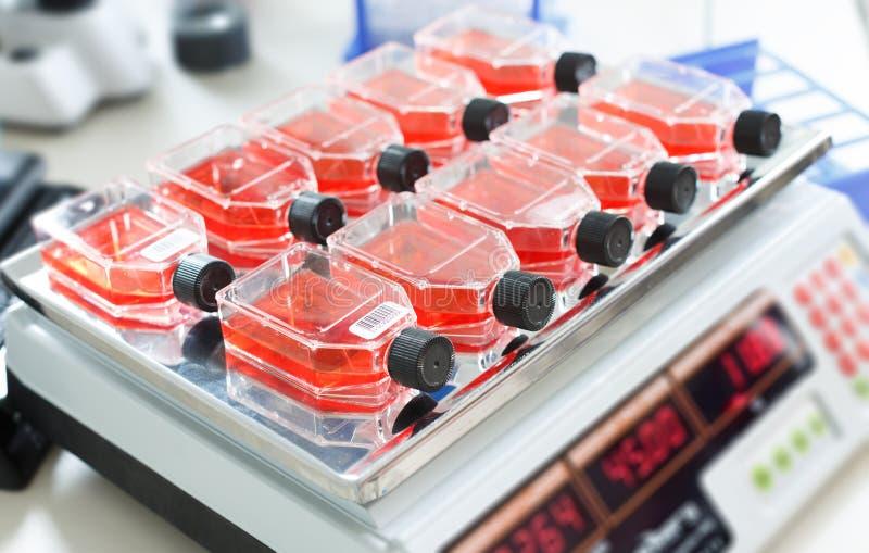 Рост бактериальной культуры стоковое изображение rf