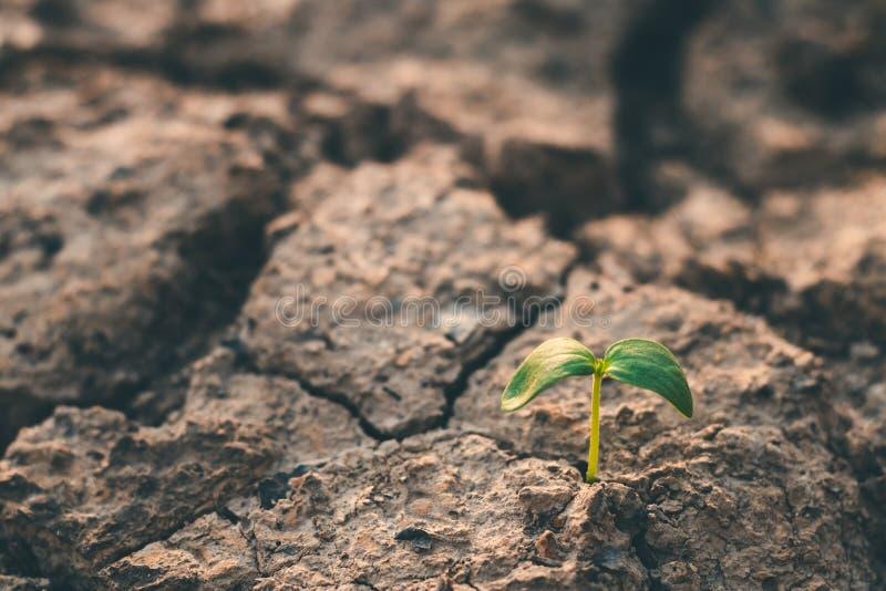 Рост деревьев в засухе, живя с засухой дерева стоковое фото rf