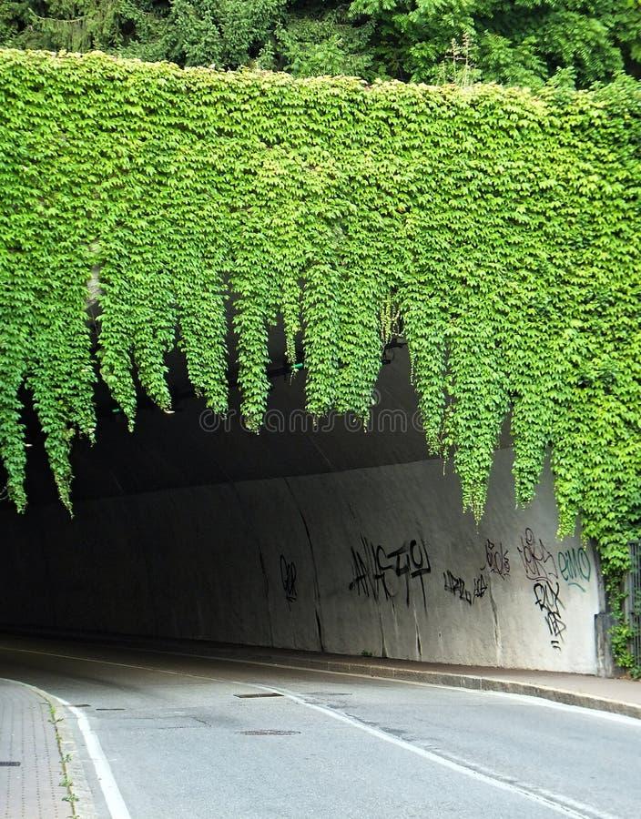 Рост зеленого плюща, свисая тоннель дороги любит занавес стоковое фото rf