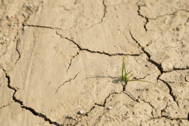 Download Рост зеленой травы на засушливой области Стоковое Фото - изображение насчитывающей countryside, смелость: 37926140