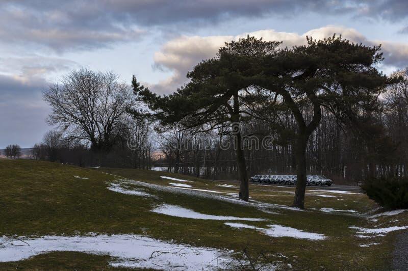 Рот и усик деревьев стоковое изображение