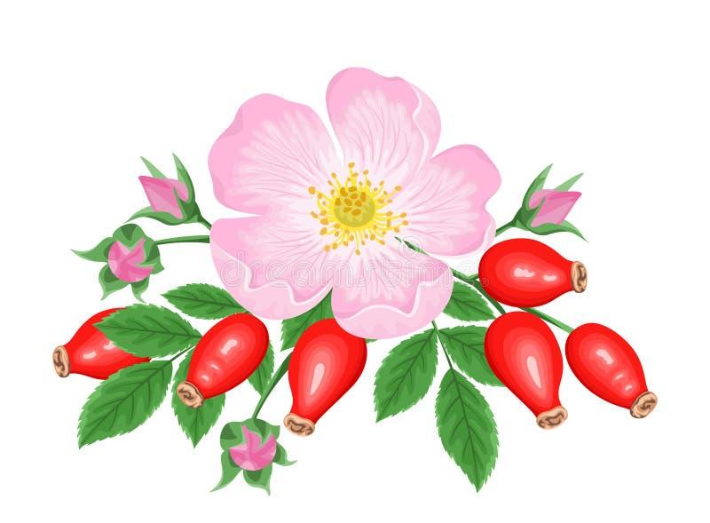 Рошип Пинк цветок, красная ягода и зеленые листья, изолированные на белом фоне Векторная иллюстрация роз собаки в простой плоской иллюстрация вектора