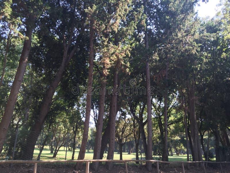 Роща деревьев в парке стоковое изображение