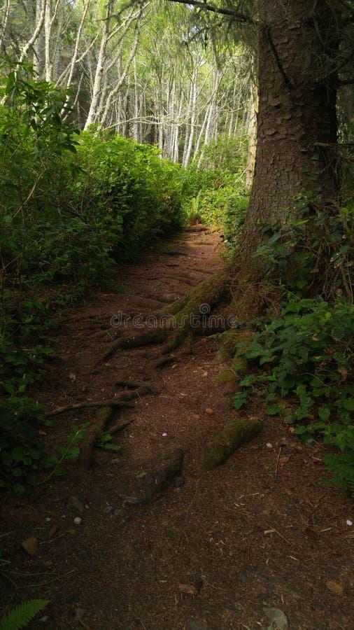 Роща леса стоковая фотография rf