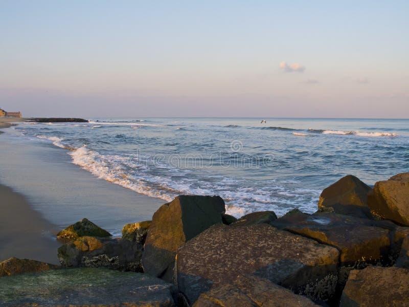 Роща океана бечевника стоковая фотография
