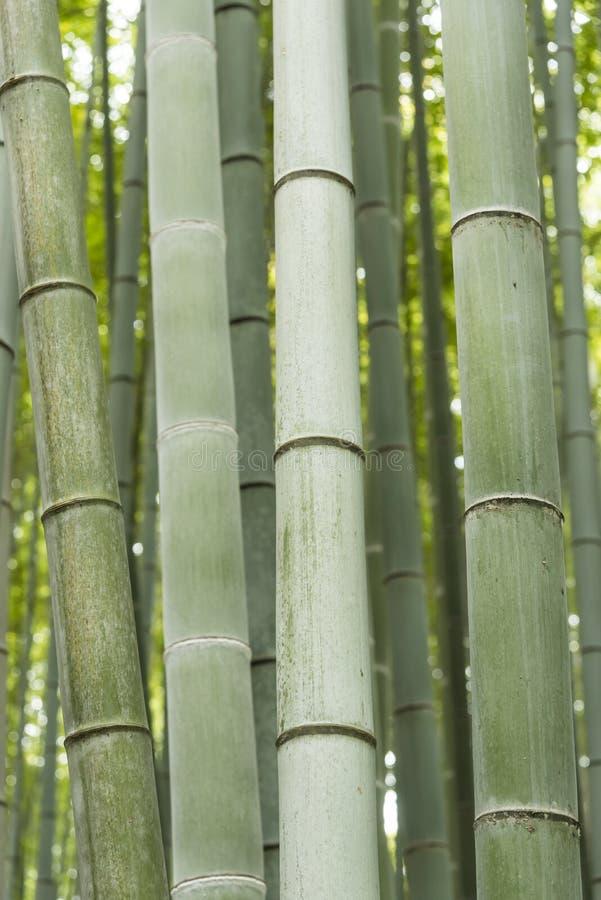 Роща Япония Arashiyama бамбуковая стоковые изображения rf