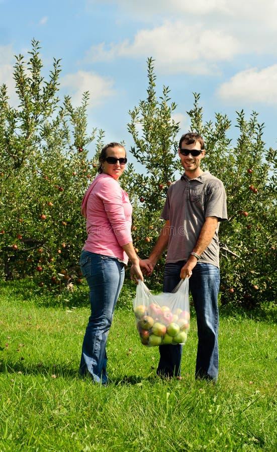 рудоразборка пар яблок стоковое изображение rf