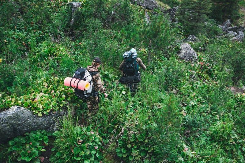 друзья идя с рюкзаками в древесинах от задней части стоковое фото rf