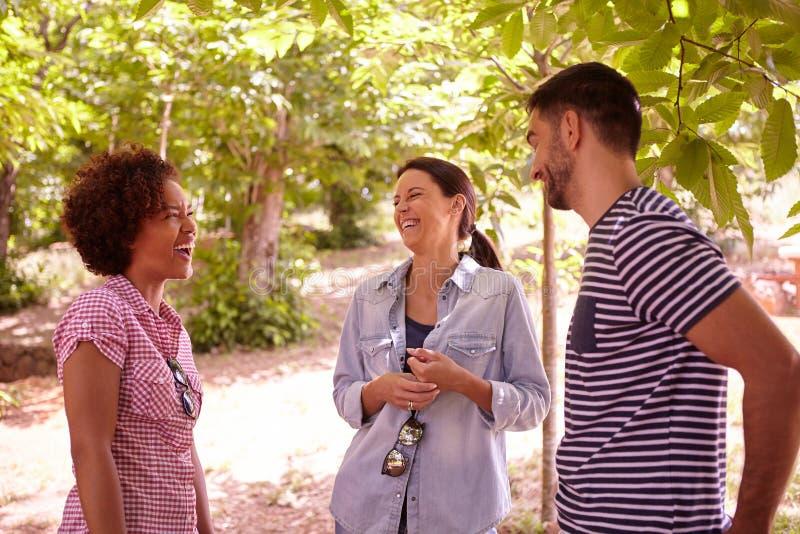 3 друз смеясь над на некоторых шутках стоковое изображение rf