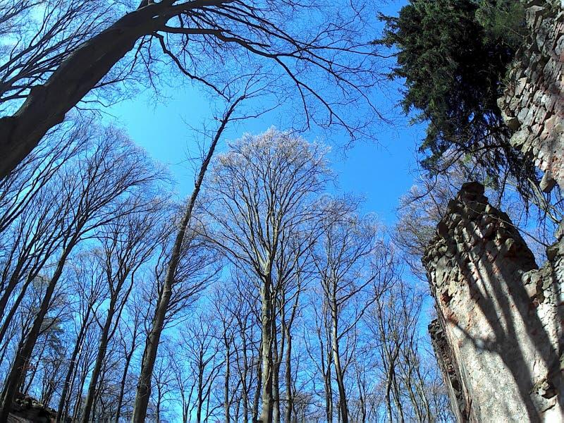 Руины и деревья стоковое фото rf