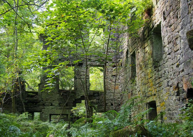 Руины мельницы staups с деревьями и папоротниками в лете стоковая фотография rf