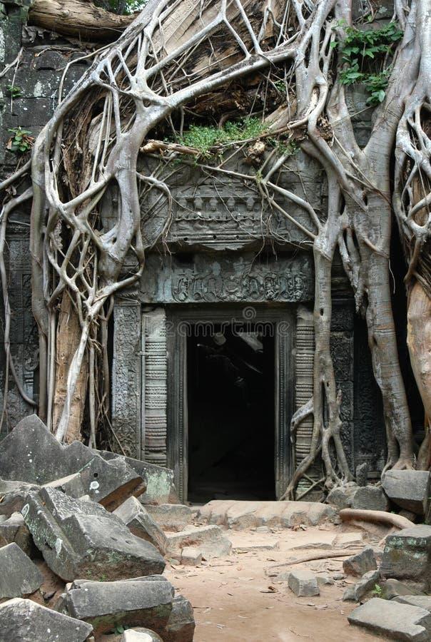 руины перерастанные khmer стоковая фотография
