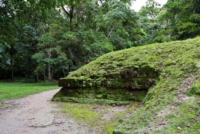Руины под джунглями стоковая фотография rf