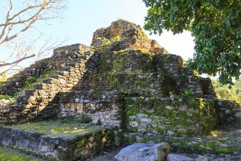 руины belize майяские стоковое фото