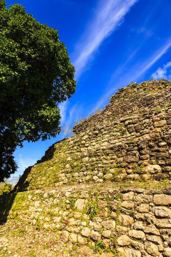 руины belize майяские стоковые изображения