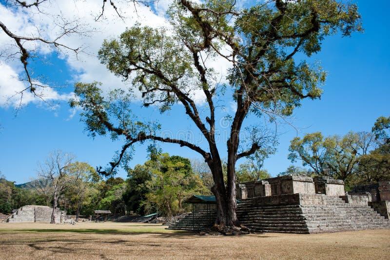 Руины Copan стоковое фото