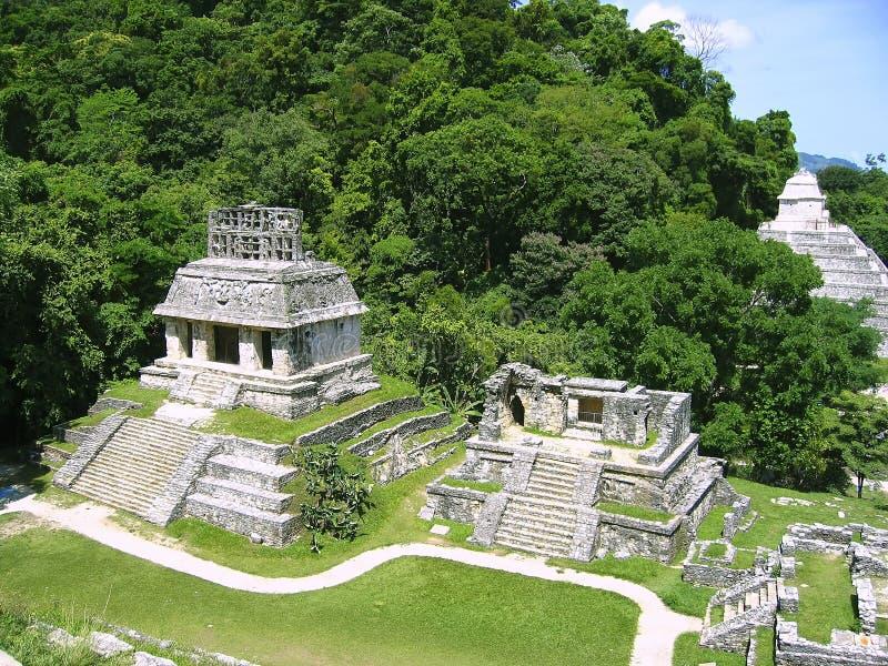 руины palenque Мексики maya chiapas майяские стоковые фотографии rf