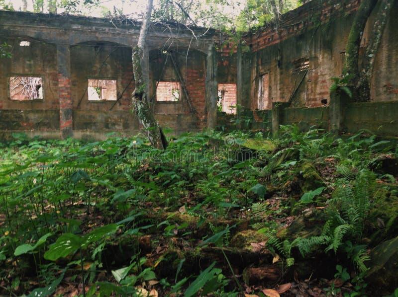 Руины Paricatuba, растительности против centenarian здания стоковые фотографии rf