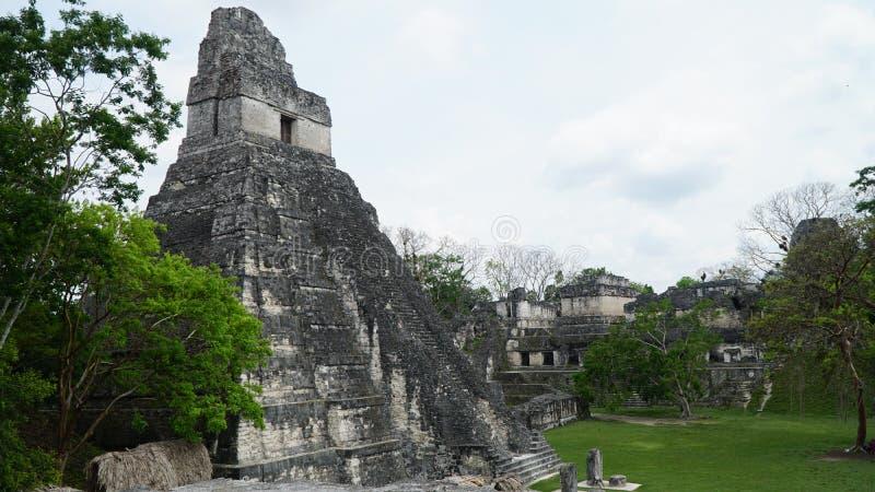 Руины Tikal Гватемалы r стоковые изображения