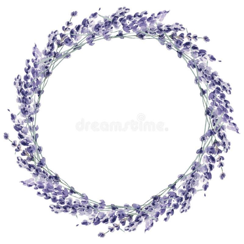 Рука акварели лаванды покрасила prov цветка иллюстрации флористическое иллюстрация вектора