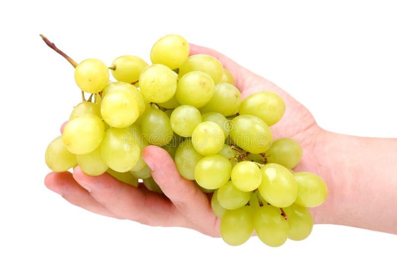рука виноградин пука зеленая стоковая фотография