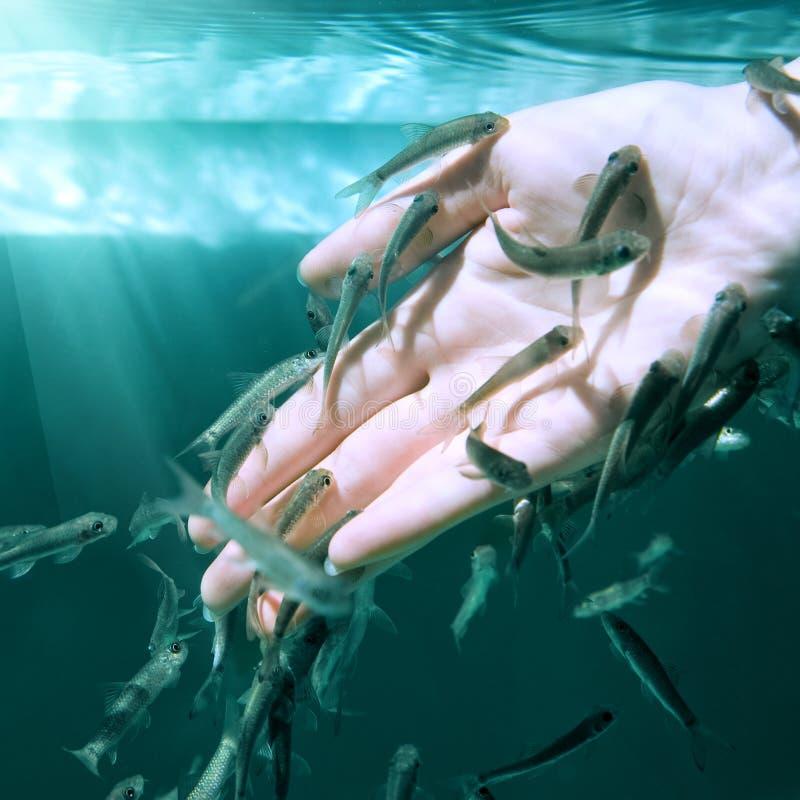 Рука в воде с рыбами (спа рыб для заботы кожи) стоковые фотографии rf